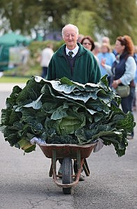 Big Head of Cabbage! Yummo!