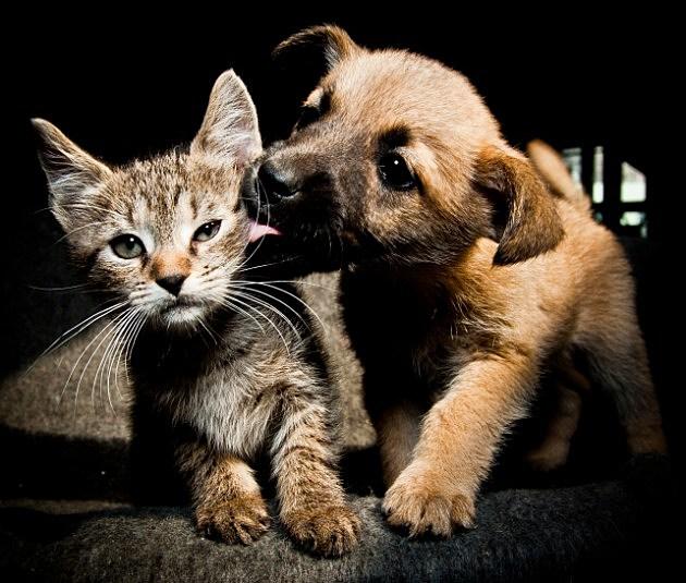 puppy-licking-kitten